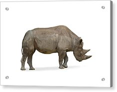 Acrylic Print featuring the photograph Rhinoceros by Charles Beeler