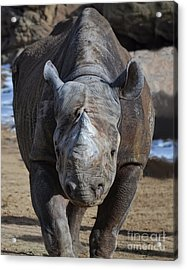 Rhinoceros Acrylic Print