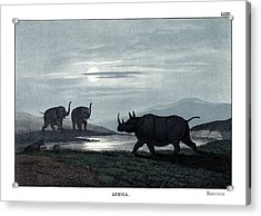Rhinoceros Acrylic Print by Splendid Art Prints