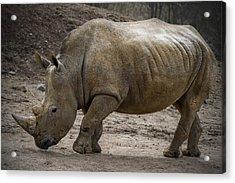 Rhinoceros Acrylic Print by Svetlana Sewell