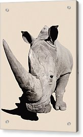 Rhinocerosafrica Acrylic Print by Thomas Kitchin & Victoria Hurst