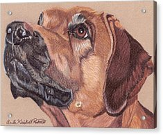 Rhodesian Ridgeback Vignette Acrylic Print
