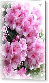 Rhodie Blossom Cascade Acrylic Print