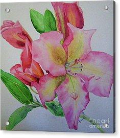 Rhodie With Dew I Acrylic Print