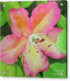 Rhodie With Dew II Acrylic Print