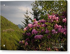 Rhododendron 1 Acrylic Print