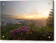Rhododendron Sunset Acrylic Print