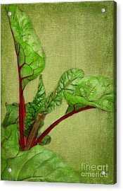 Rhubarb Acrylic Print by Judi Bagwell