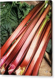 Rhubarb Acrylic Print by Ray Lacey/science Photo Library