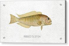 Ribbed Tilefish Acrylic Print