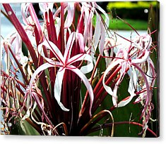Ribbon's And Lace Acrylic Print