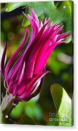Ric Rac Orchid Cactus Acrylic Print by Michelle Wiarda
