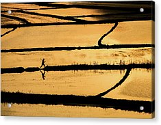 Rice Acrylic Print by ?mm? Nisan