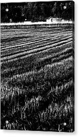 Rice Paddies Acrylic Print by Edgar Laureano