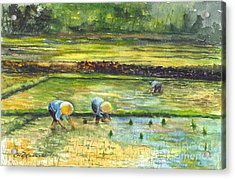 The Rice Paddy Field Acrylic Print by Carol Wisniewski