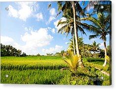 Rice Paddy Fields In Ubud Bali Indonesia Acrylic Print by Fototrav Print