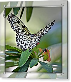 Rice Paper Butterfly 2b Acrylic Print by Walter Herrit