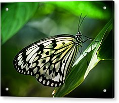 Acrylic Print featuring the photograph Rice Paper Butterfly by Zoe Ferrie