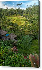 Acrylic Print featuring the photograph Rice Terraces - Bali by Matthew Onheiber