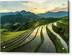 Rice Terraces At Mu Cang Chai, Vietnam Acrylic Print by Chan Srithaweeporn