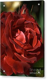 Acrylic Print featuring the photograph Rich Is Rose by Joy Watson