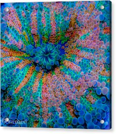 Ricordea Galaxy Acrylic Print by Guinapora Graphics