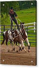 Ride Them Cowboy Acrylic Print by Karol Livote