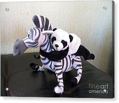 Acrylic Print featuring the photograph Riding A Zebra.traveling Pandas Series by Ausra Huntington nee Paulauskaite