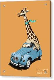 Riding High Colour Acrylic Print by Rob Snow