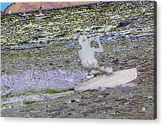 Riding With The Wind Acrylic Print by Jeff Swan