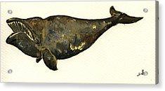 Right Whale Acrylic Print by Juan  Bosco