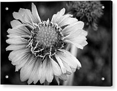 Acrylic Print featuring the photograph Rime Time by Julia Hassett