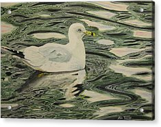 Ring Bill Seagull Acrylic Print by Stan Tenney