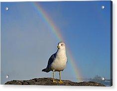 Ring Billed Seagull At Niagara Falls Acrylic Print