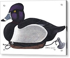 Ring-neck Duck Decoy Acrylic Print by James Lewis