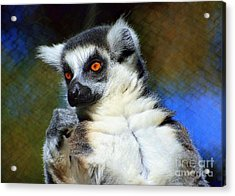 Acrylic Print featuring the photograph Ring-tailed Lemur by Lisa L Silva