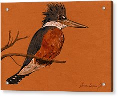 Ringed Kingfisher Bird Acrylic Print by Juan  Bosco