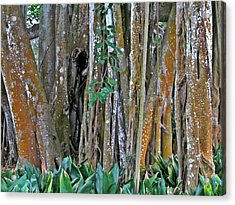 Ringling Trees 1 Acrylic Print by Maria Huntley