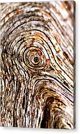 Rings Acrylic Print by Jacqui Collett