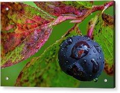 Ripe Huckleberries In A Light Rain Acrylic Print