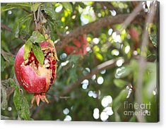 Acrylic Print featuring the photograph Ripe Pomegranate by Julie Alison