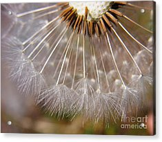 Acrylic Print featuring the photograph Ripe To Fly by Agnieszka Ledwon