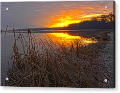 Acrylic Print featuring the photograph Rising Sunlights Up Shore Line Of Cattails by Randall Branham