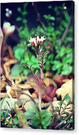Acrylic Print featuring the photograph Rising Wildflower by Candice Trimble