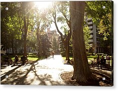 Rittenhouse In The Sun Acrylic Print by Christopher Woods