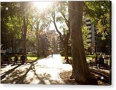 Rittenhouse In The Sun Acrylic Print