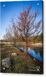 Acrylic Print featuring the photograph River And Winter Trees by John Wadleigh