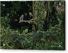 River Bird Of Prey Acrylic Print