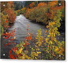 River Color Acrylic Print by Leland D Howard