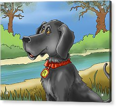River Dog Acrylic Print by Hank Nunes